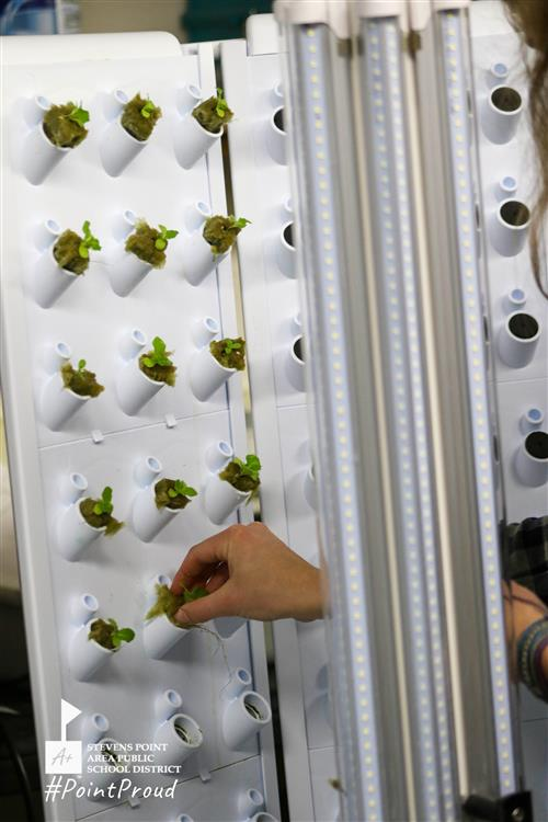 Students plant lettuce in tower