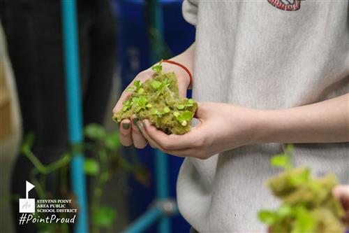 student holding lettuce to transfer to tower